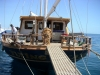 Akacia Back of Boat, Red Sea Hurghada