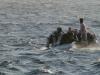 Gulf Divers Fully Maned Zodiac, Red Sea Hurghada