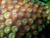 sea_coral_marsa_alam