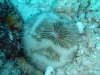 swirl_coral_egypt_red_sea_hurghada