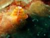 swirl_coral_hurghada_red_sea_egypt