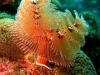 swirl_coral_red_sea_diving_egypt