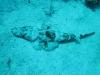 crockodile_fish_egypt_hurghada_red_sea