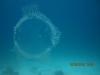 jellyfish_egypt_hurghada_red_sea