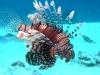 lion_fish_red_sea_hurghada