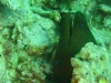 morae_eel_red_sea_hurghada