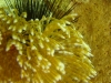 sea_urchin_hidden_behind_coral