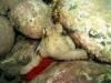 octopus_oceans_divers