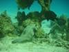 pufferfish_hurghada_red_sea_egypt