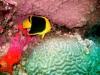 hurghada_egypt_rock_beauty_fish