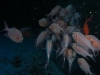 red_sea_fish_night_dive