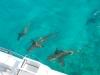 marsa_alam_three_sharks_boat_shot