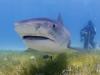 shark_marsa_alam