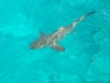 shark_surface_shot_marsa_alam_egypt